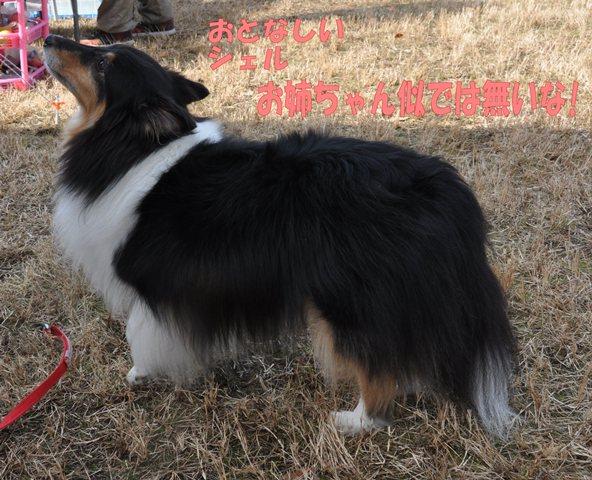 Dsc_0040_20121209111819.jpg
