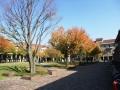 秋の風景4