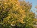 秋の風景8