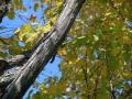 秋の風景9