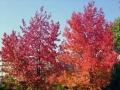 秋の風景11