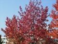 秋の風景13