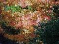 秋の風景14