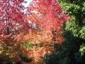 秋の風景15