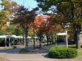秋の風景16