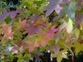 秋の風景17