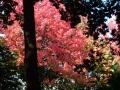秋の風景20