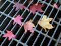秋の風景21