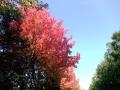 秋の風景22