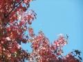 秋の風景23