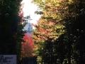 秋の風景24