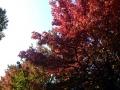 秋の風景25