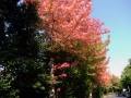 秋の風景26