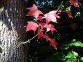 秋の風景27