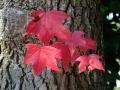 秋の風景28