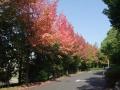 秋の風景29