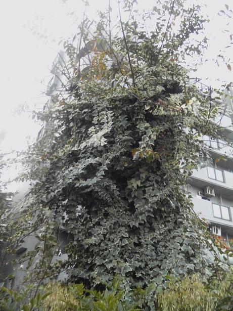 高円寺の街路樹2014#3
