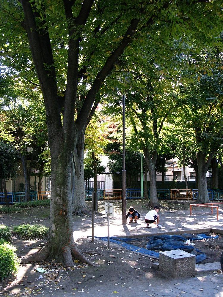 2010_11_03 034 (13)