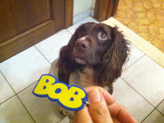 bobkey