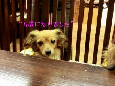 PHOTO073.jpg