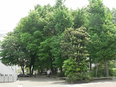 大学キャンパスは森に