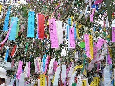 交野機物神社の七夕です