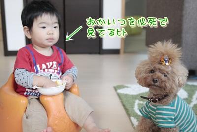 2_20121212235336.jpg