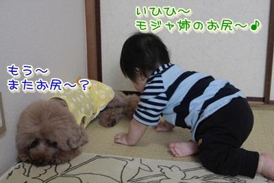 3_20120529103225.jpg