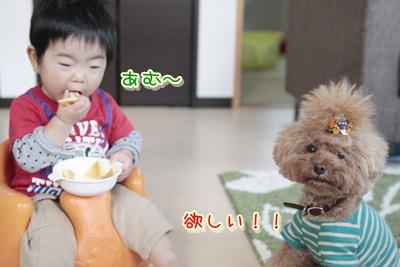 3_20121212235336.jpg