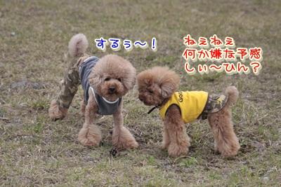 8_20120520104952.jpg