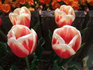 2012_0419_093559-DSCF5672.jpg