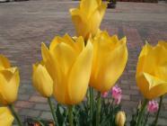 2012_0419_093611-DSCF5673.jpg