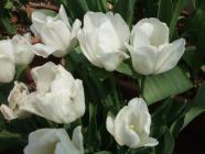 2012_0419_093708-DSCF5677.jpg
