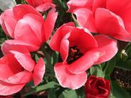 2012_0419_093719-DSCF5678.jpg