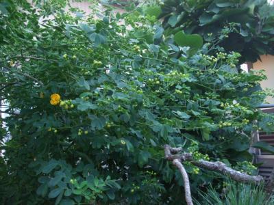 2012_0915_171613-DSCF6502.jpg
