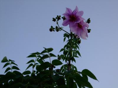 2012_1109_163443-DSCF6002.jpg