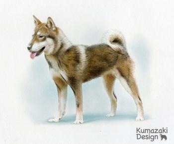 ペット肖像画 ペットの絵 ペット画 似顔絵 イラスト 遺影 犬 いぬ 小犬 子犬 色えんぴつ画 色鉛筆画