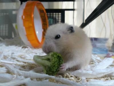 日記5・7ブロッコリー食う2