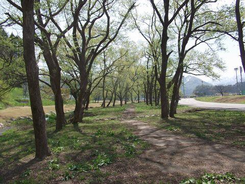 mizukusa0429-1.jpg