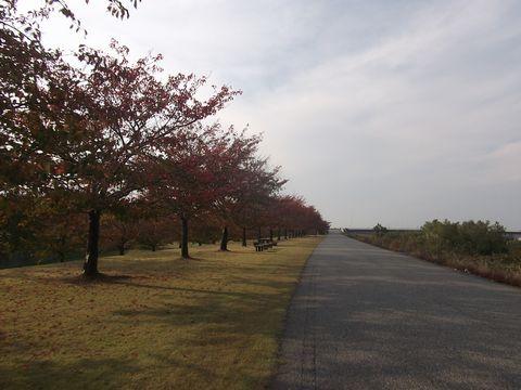 sakura1027-1.jpg