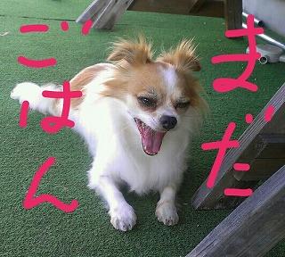 PE_20120826080634.jpg