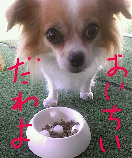PE_20120826084004.jpg