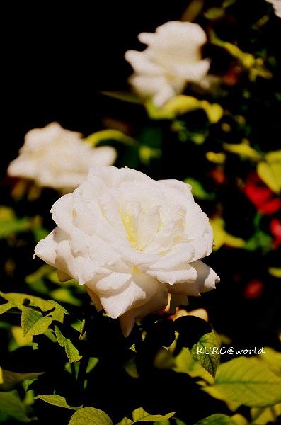 s-DSC_0526_20121007233812.jpg