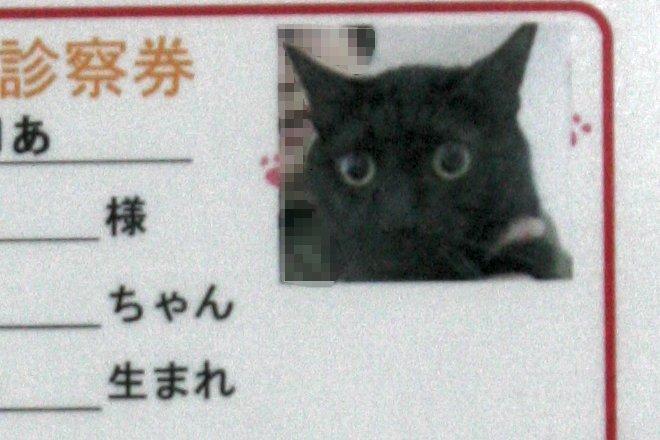 201204_shinsatsukenkotaro.jpg