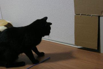 kotasuzu03.jpg