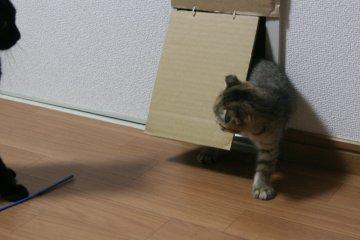 kotasuzu05.jpg