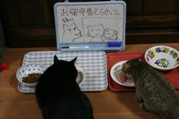 kotasuzu37.jpg