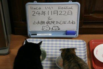 kotasuzu47.jpg