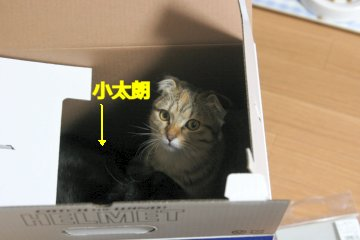kotasuzu93R.jpg