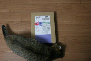 suzu124.jpg